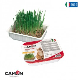 CAT GRASS - BARLEY