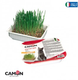 CAT GRASS - WHEAT